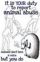 What Should Be Done With Animal Abusers Castration too good ? 1