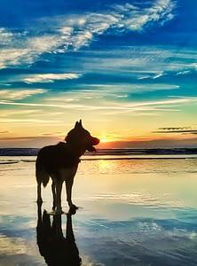 Saberdog My Dog And Best Friend German Shepherd Siberian Husky Mix