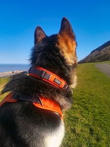 Dog Copenhagen Comfort Harness