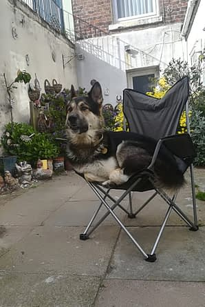 camping with my dog