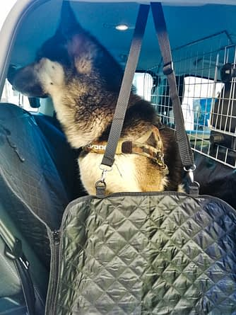 Thunderpaws Pet Car Seat Cover, Good or Bad Maybe Impressive 2