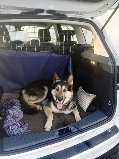 Saber In The Car ready to go