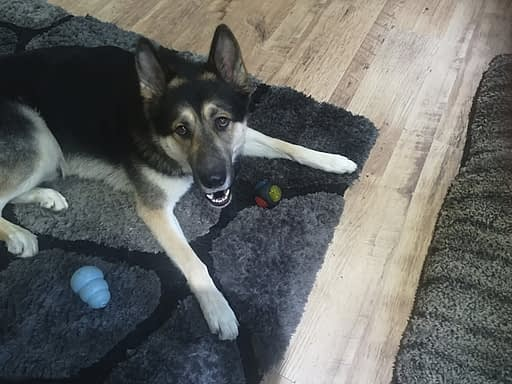 What Is Your Dogs Favourite Toy?