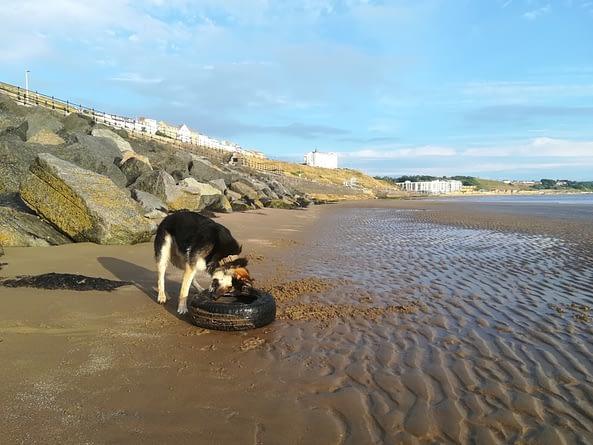 How Often Do You Bathe Your Dog?