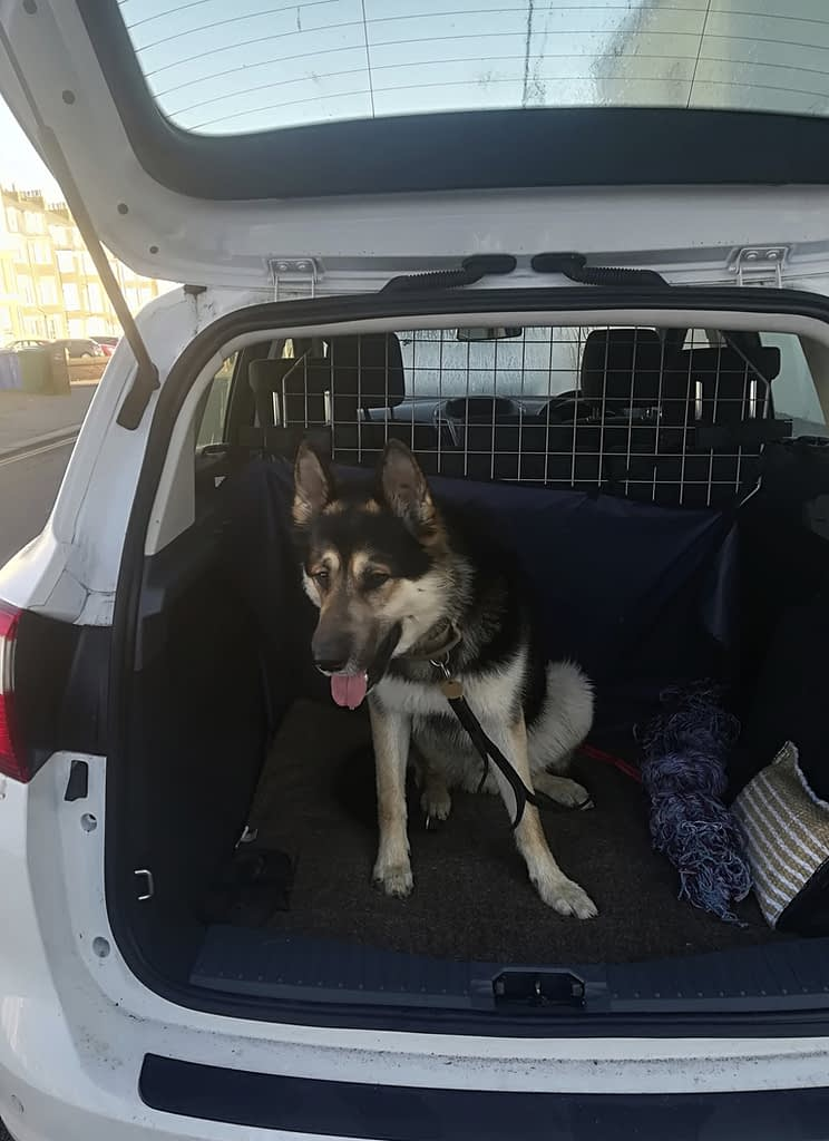 Me & My Pets Car Window Dog Vent/Guards