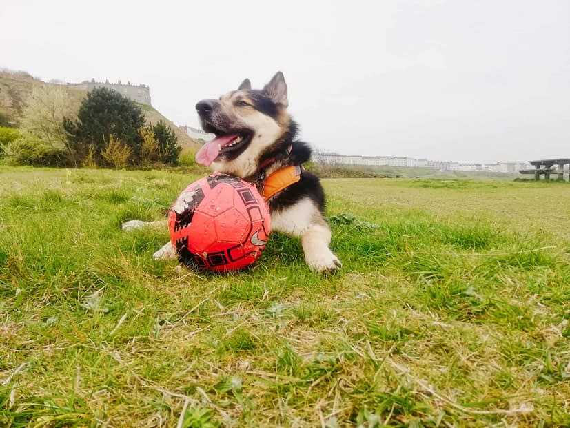 What is your dogs favourite toy