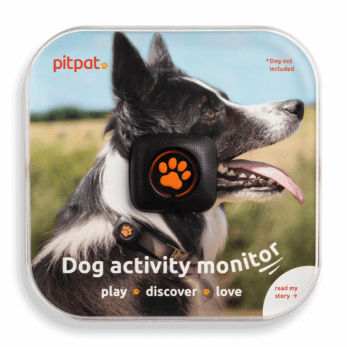 PitPat Review A Dogs activity monitor Good Or Surprising